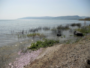 Tiny shells on the shores of Talgha, the Sea of Galilee in Israel