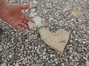 Heart found on path at Megiddo in the Valley of Jezreel. Solomon stabled thousands of horses and chariots here. 1Kings 4:12 and 4:26