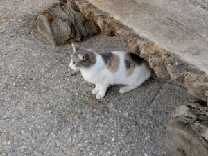 Sweet kitty looking for food from traveling pilgrims and visitors to the park.