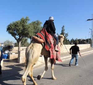 2016-01-28 Camel Working