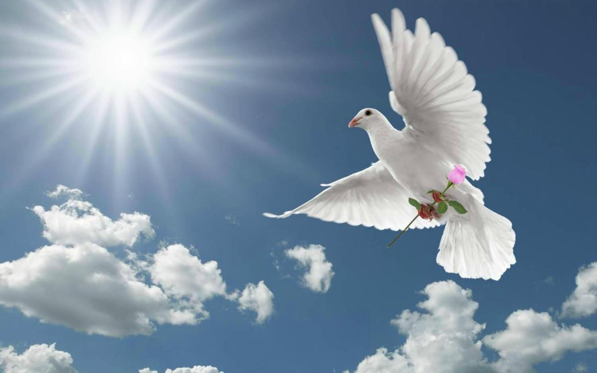 Blessings of the Morning Dove