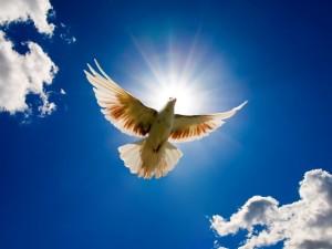 Dove - Ruth 3-14