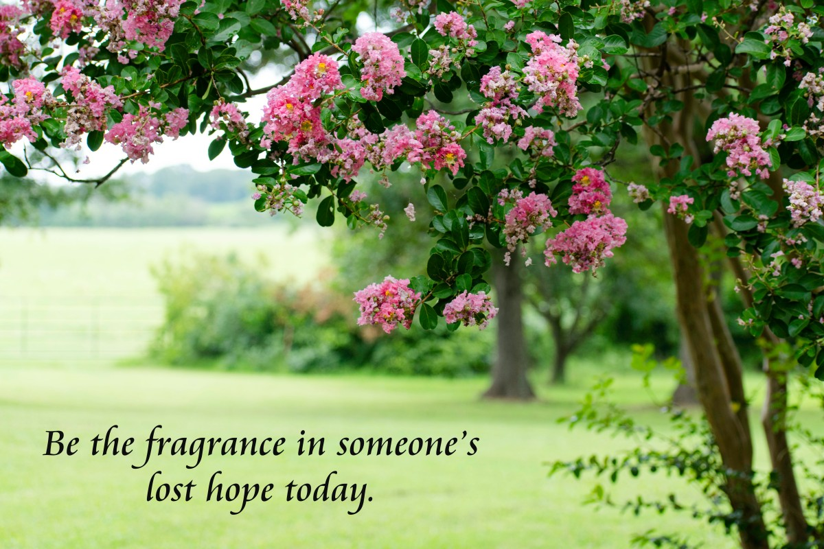 Release the Fragrance!