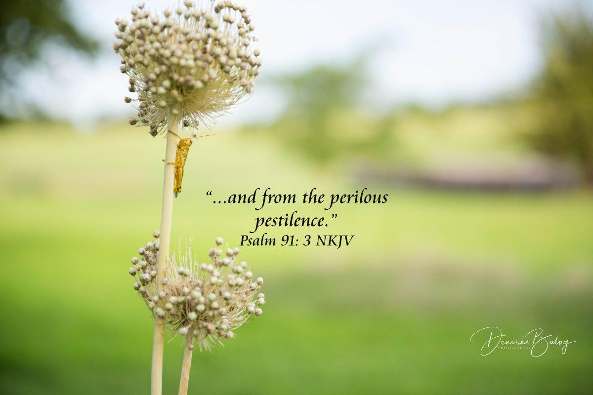 Psalm 91:3 – FaithPictures